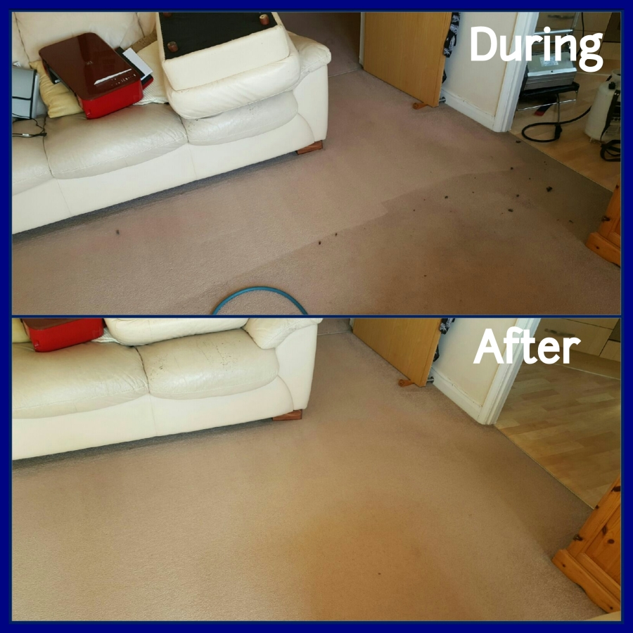 during and after carpet cleaning